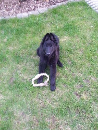 Benny---Lennox-mit-seinem-Spielzeug