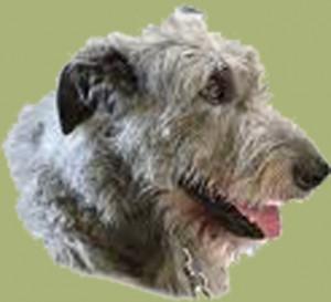 Hund-D1
